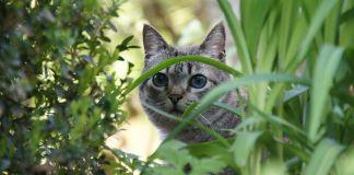 Gatos huertos