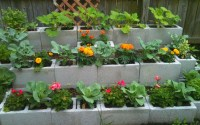 15 Creative Cinder Block Raised Garden Beds - Garden ...