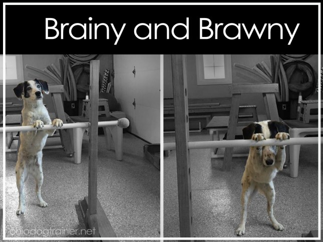 brainy and brawny-dasiy-bar