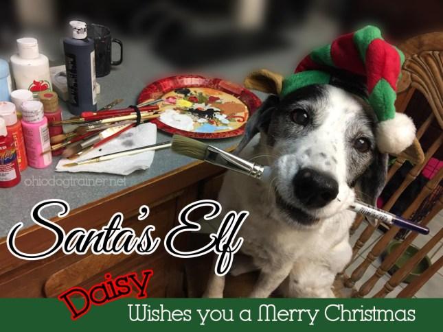 santa elf-daisy-