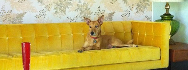 The-pic-that-made-Gracie-the-model-for-Glenbrook-Valley.-@glenbrookvalley-pharohhound-gracie-glenbro