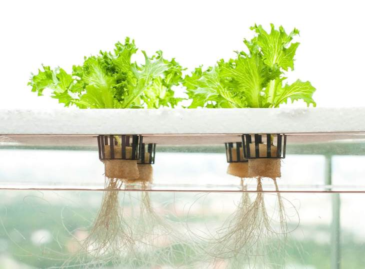 Hydroponics method of farming