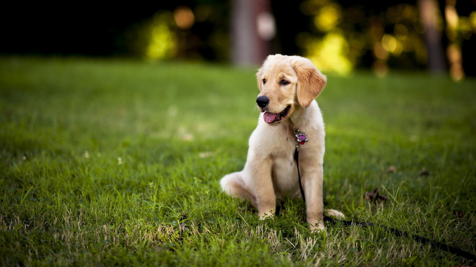 Cute Puppy Images Wallpaper Fluffy 12 Fantastic Hd Labrador Wallpapers