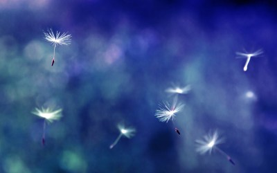 12 Pretty HD Dandelion Wallpapers