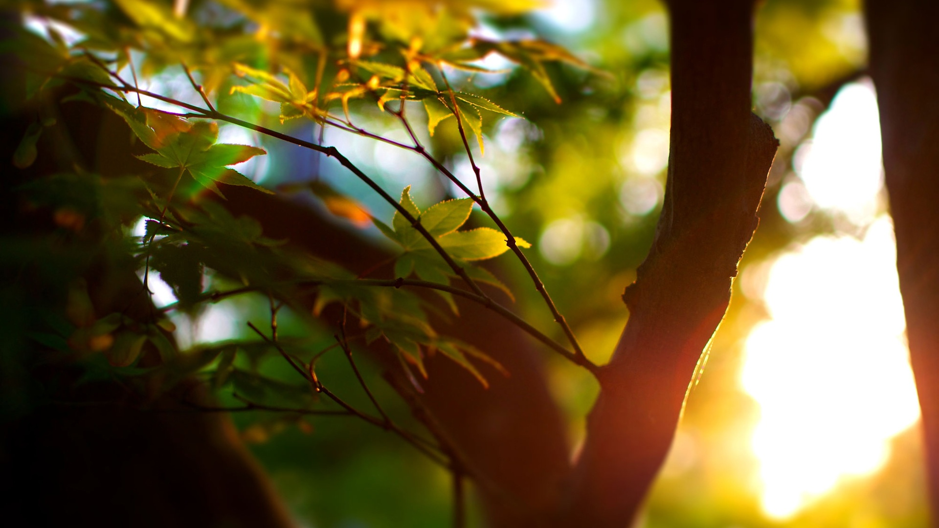 Wordpress Blog Bilder 12 Pretty Hd Sunlight Wallpapers