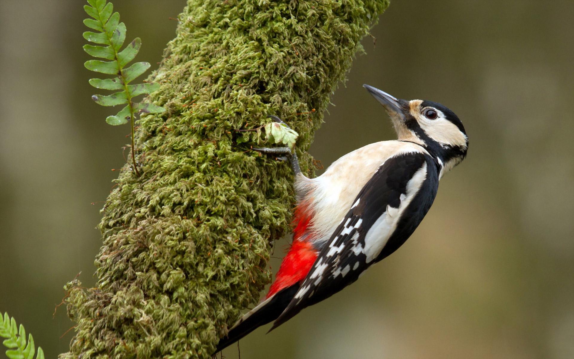 Paul George Wallpaper Hd Woodpecker Bird Wallpapers Archives Hdwallsource Com