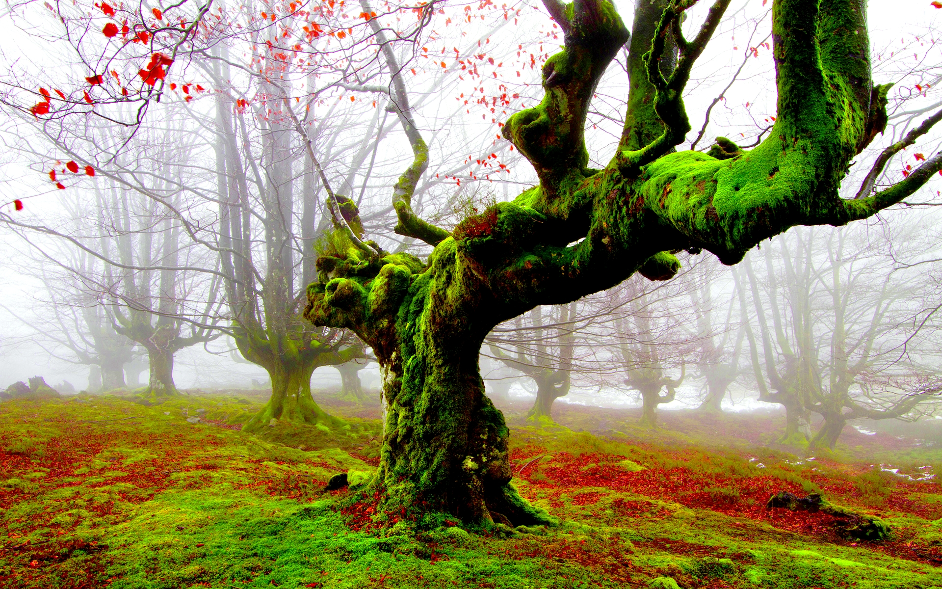 Hd Best Wallpapers For Laptop 28 Fantastic Hd Moss Wallpapers