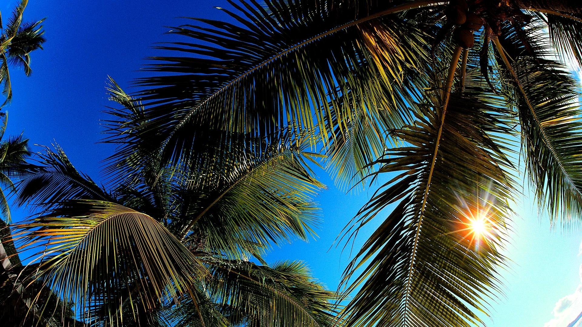 Cute Palm Tree Wallpaper 11 Lovely Hd Palm Leaf Wallpapers