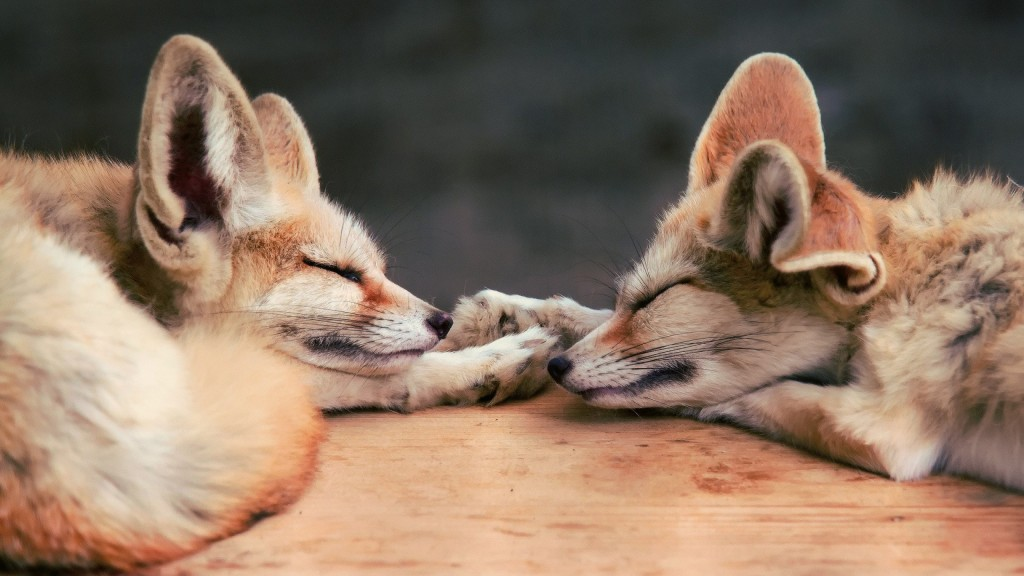 Cute Couple In Love Hd Wallpaper 13 Excellent Hd Fennec Fox Wallpapers