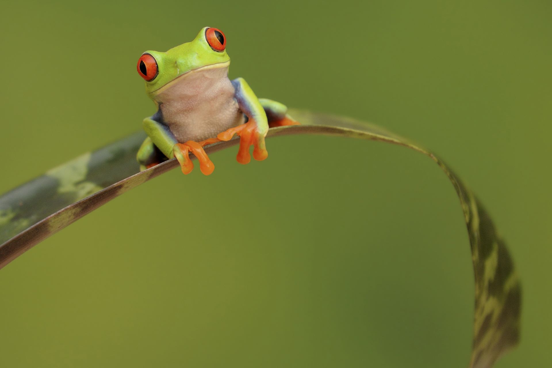 Hp Full Hd Wallpaper 28 Excellent Hd Frog Wallpapers