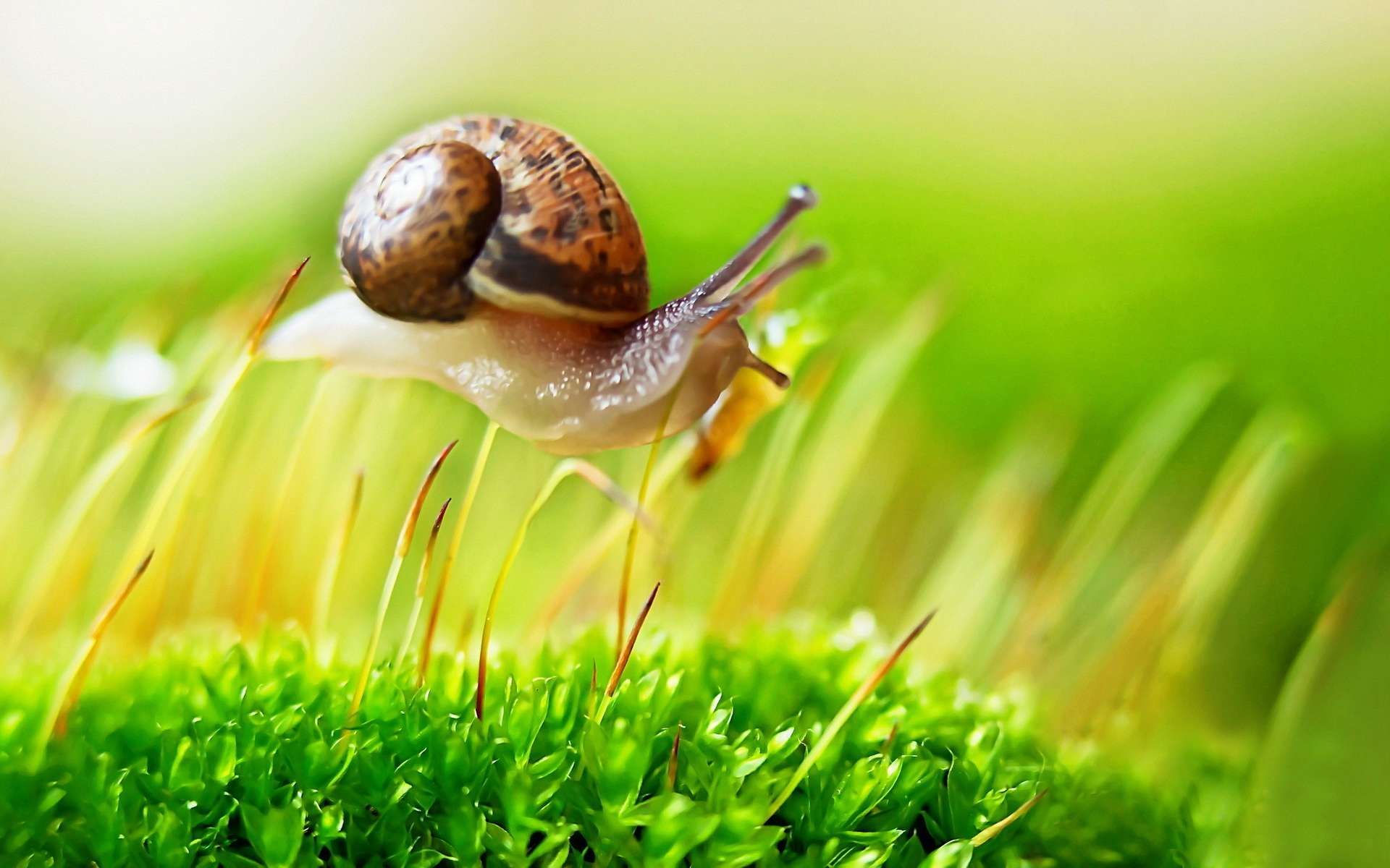 Cute Wallpapers On Computer 36 Excellent Hd Snail Wallpapers