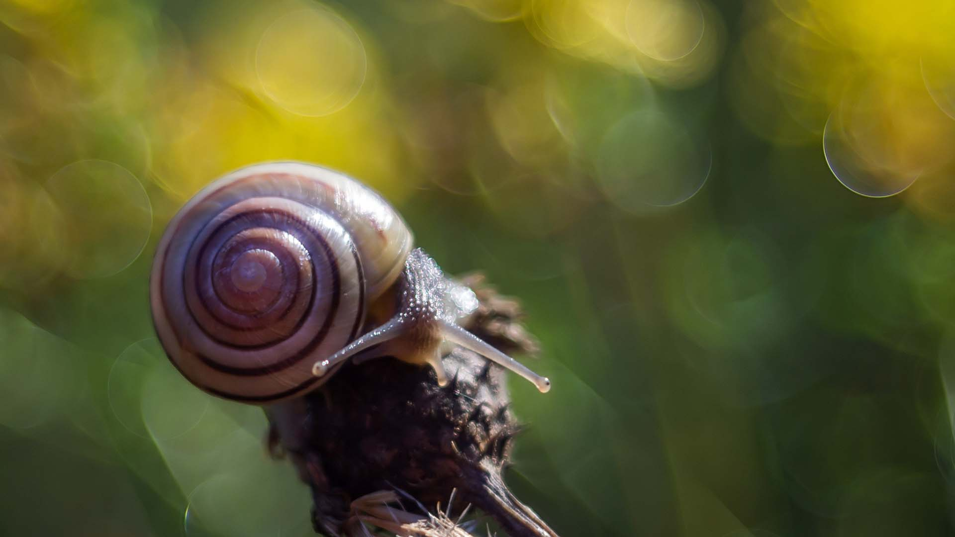 Animal Wallpaper Download 36 Excellent Hd Snail Wallpapers
