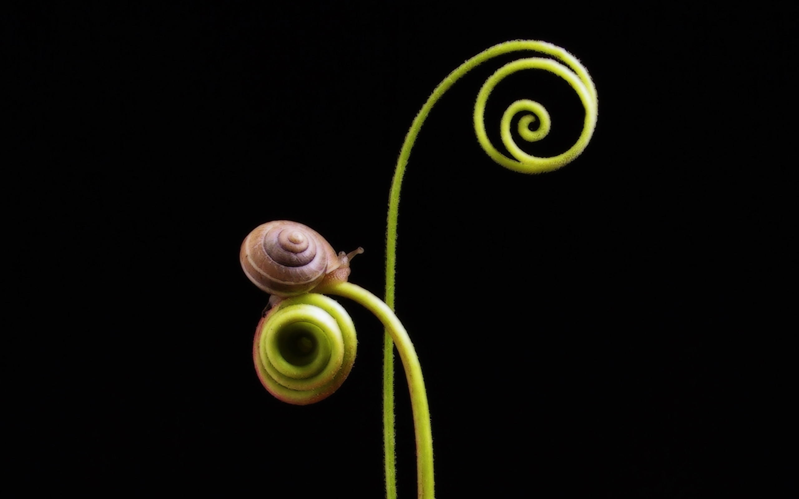 Cute Wallpapers November 36 Excellent Hd Snail Wallpapers