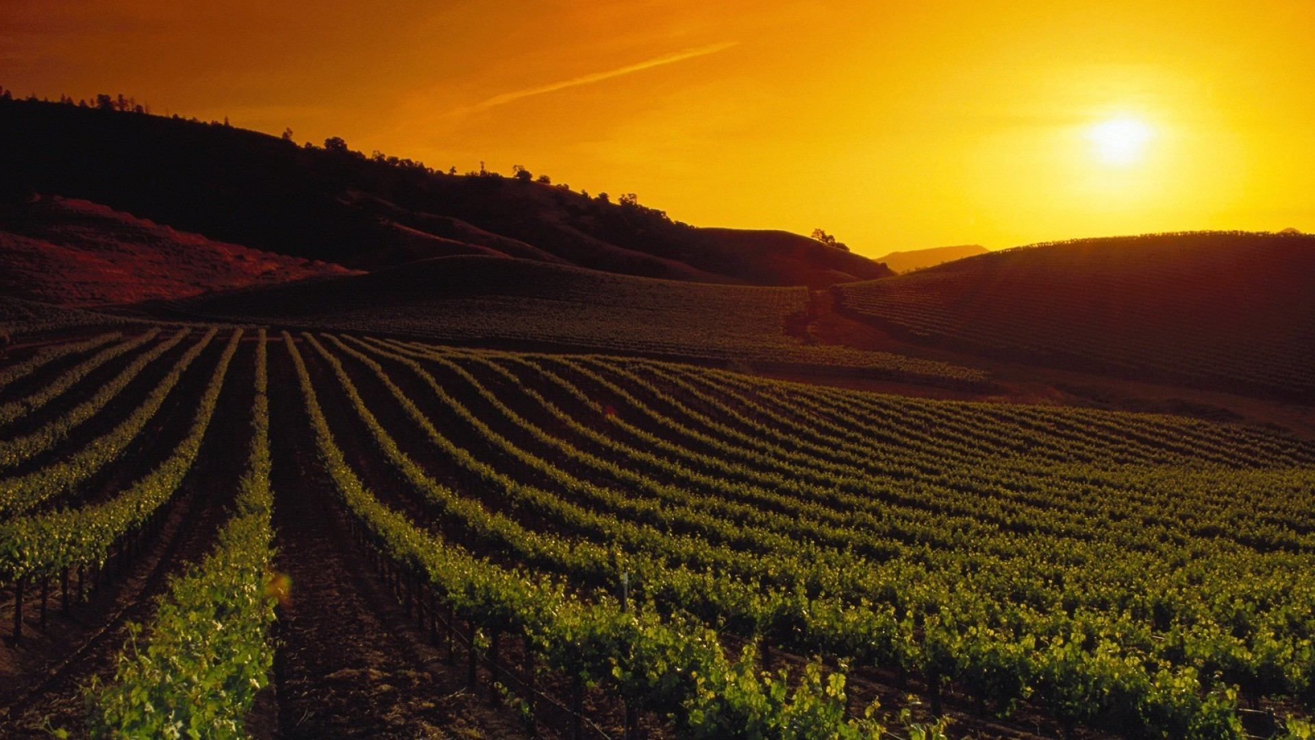Wordpress Blog Bilder 27 Wonderful Hd Vineyard Wallpapers