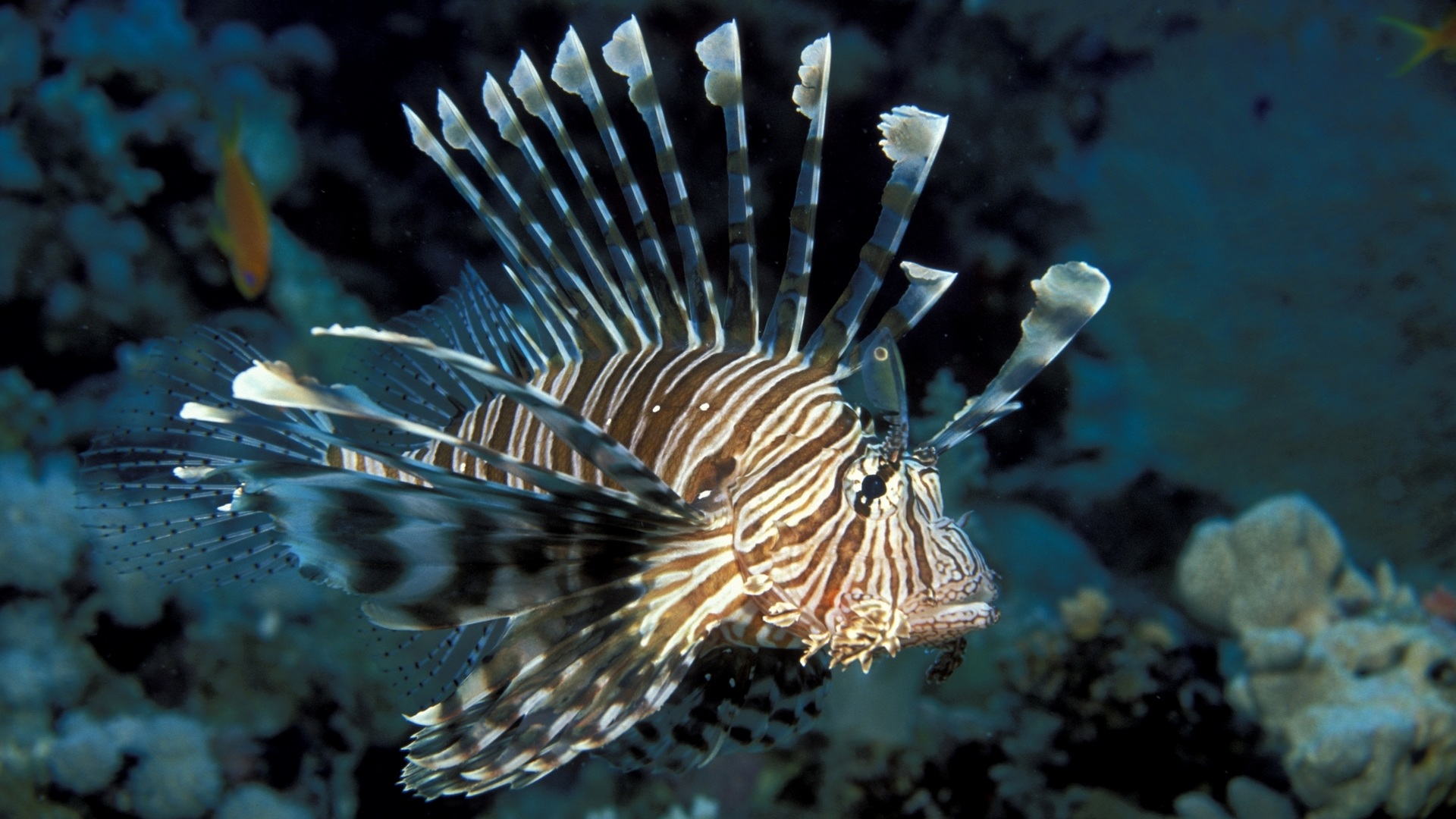 Paul George Wallpaper Hd Lionfish Wallpapers Archives Hdwallsource Com
