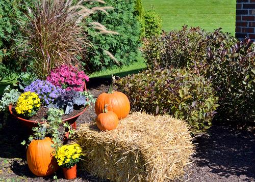 Fall-Front-Yard