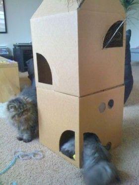 cardboard6