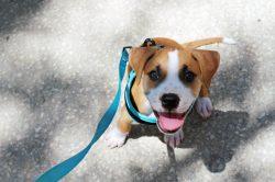 Small Of Lehigh County Humane Society