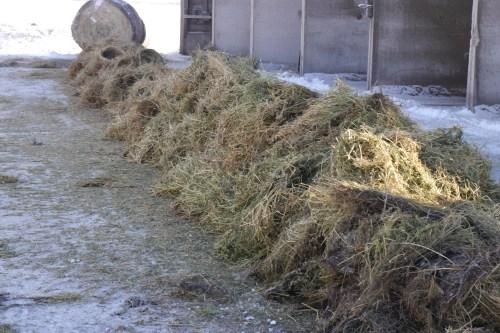 Medium Of Hay Vs Straw