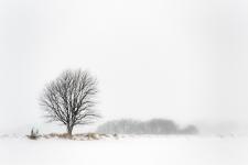 Denmark, winter, December 2012