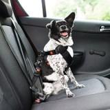 Consejos para llevar un perro en el coche