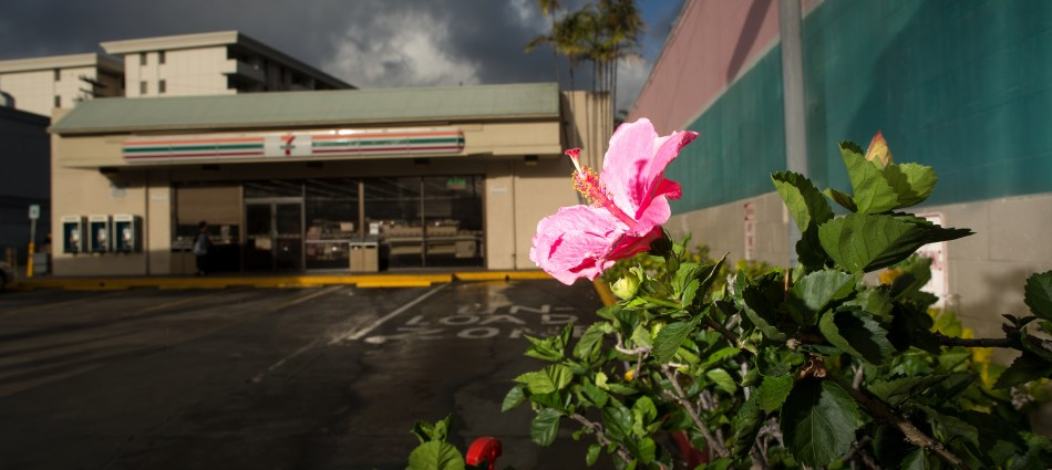 King St. Hibiscus