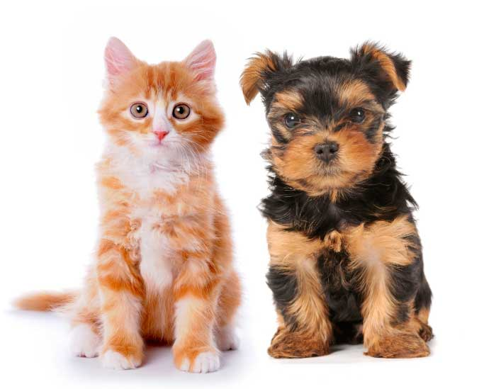 cute-cat-dog