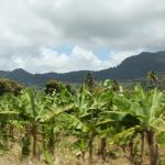1109-Derek-Hatfield-St-Lucia