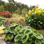 Greenhithe rain garden
