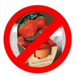 Urgent recall of strawberry kits sold by The Warehouse