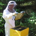New beekeeping service launched in Auckland