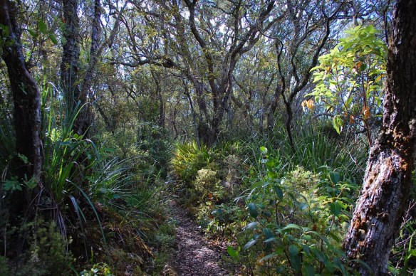 Complex layering in established coastal forest