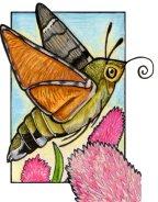 hummingbirdhawkmoth