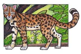 leopardcat