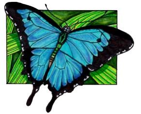 ulyssesbutterfly