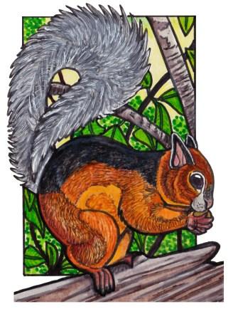 varigatedsquirrel