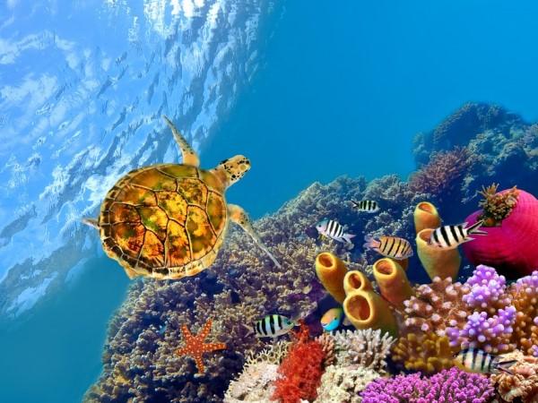 vacanze sul mar rosso? consigli by lol.travel - Soggiorno Mar Rosso 2