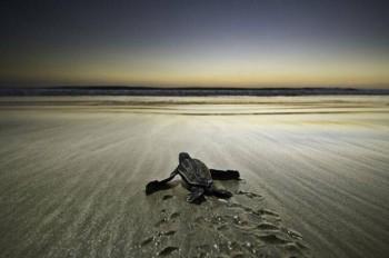 Sea Turtle Lights