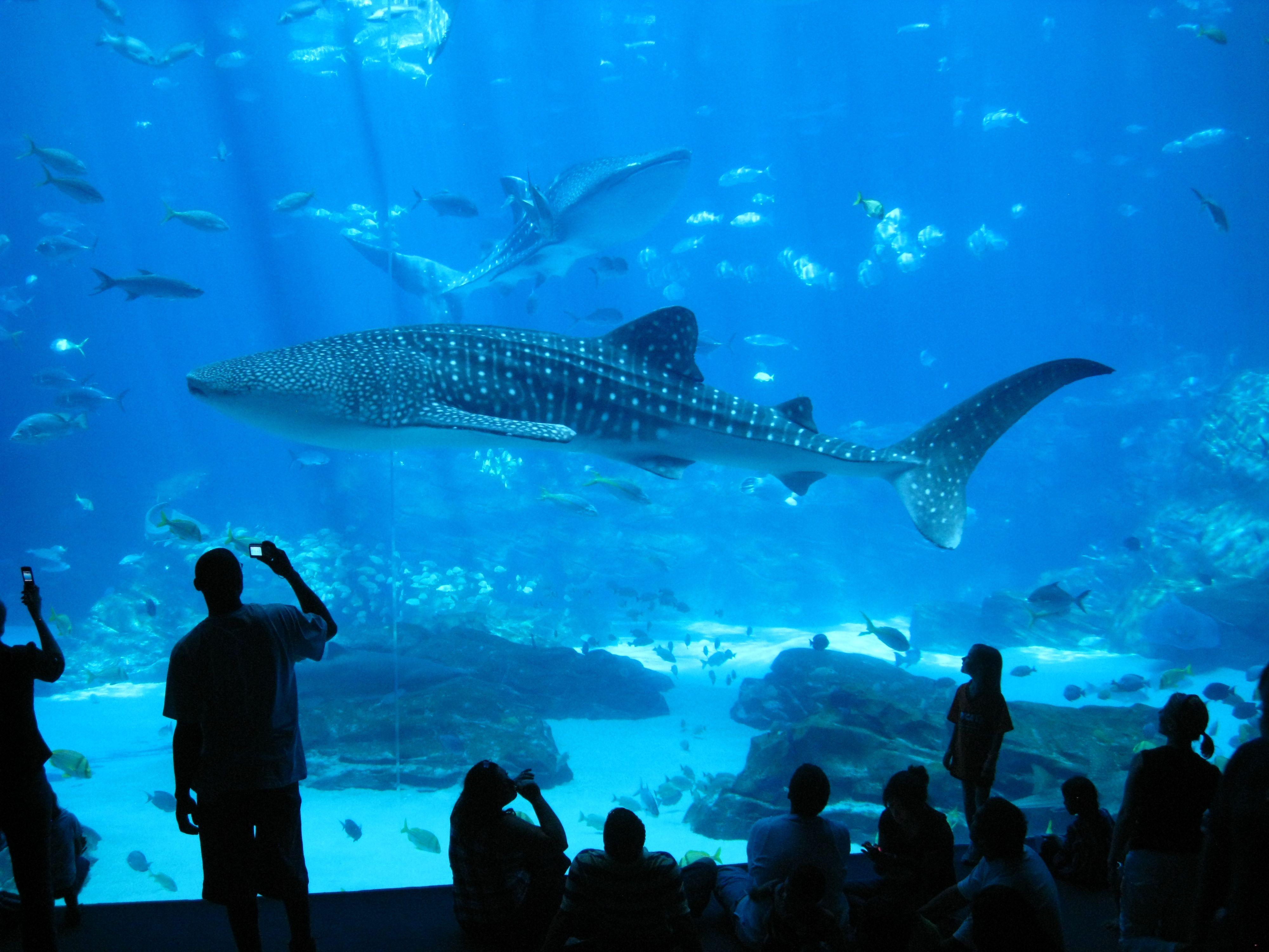Fish Tank 3d Wallpaper North America Aquarium Diving Madurodive Blog