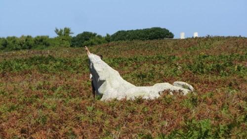 Le narval de l'île de Sein