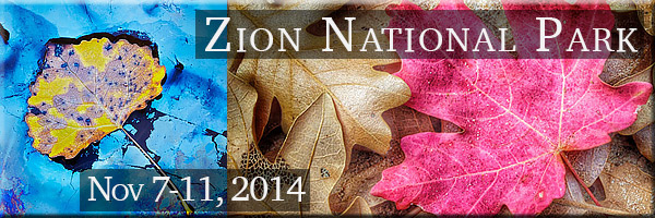 Fall Foliage in Zion National Park, Utah. A field photography workshop for 8 students.