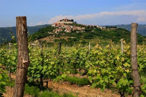 istrian-vineyards