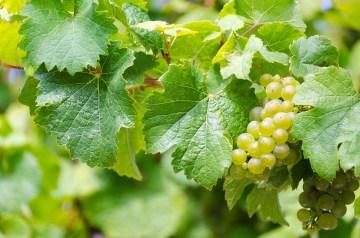 industria vitivinicola