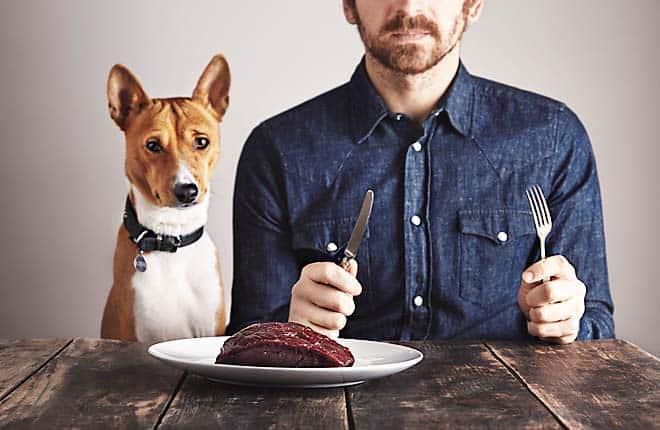 You are currently viewing Milyen vitaminok kellenek a kutyáknak?