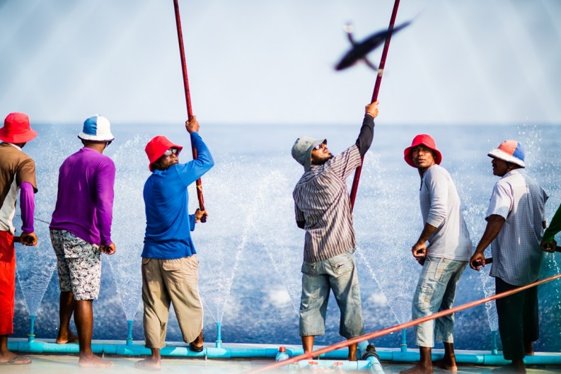 Maldives pole and line skipjack tuna fishers