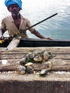 Image of Ashtamudi hand diver using his feet to loosen clams.