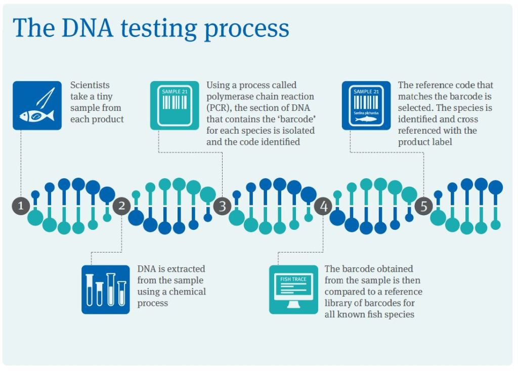 The MSC DNA testing process