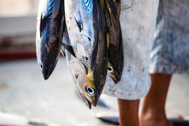 Yellowfin tuna ©MSC