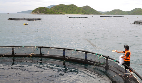 Man feedinf fish at fish farm