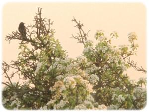 Lieber Baum (3)